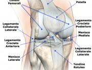 Ginocchio tendini legamenti ossa