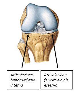 condropatia femoro-tibiale